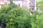 Heute: Grünanlage mit Bäumen