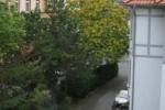 Grüne Nachbarschaft im Sommer